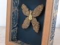 Coffret papillon